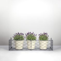 This handwoven diamond latticework is the perfect vintage design for sash windows or fixed to your house wall. Metal Window Boxes, Wall Boxes, Iron Windows, Sash Windows, Botanical Interior, House Wall, Window Sill, Exterior Paint, Box Design