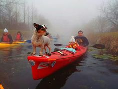 Kayak Camping The Great Outdoors Making family memories - a great photo and kayaking is a great thing to share with others! Kayak Boats, Kayak Camping, Canoe And Kayak, Kayak Fishing, Kayak Dog, Kayaks, Kayaking With Dogs, Oregon Coast Camping, Small Shark