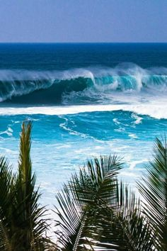 The thing that is first do every morning is go online to check the surf. If the waves are good, I'll go surf. Oahu Hawaii, Hawaii Ocean, Ocean Beach, Hawaii Waves, Blue Beach, Beautiful Islands, Beautiful World, Beautiful Ocean, Most Beautiful Beaches