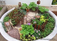 """Looking at garden ideas and came across sites for miniature """"fairy"""" gardens.  They are so cute!  Going to have to make one of my own..."""