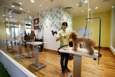 Pinned from businessweek.com. Dog grooming salon in mall in Japan.