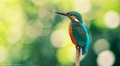 A Bird by Corentin Foucaut