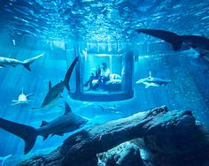 french design agency ubi bene has collaborated with airbnb on an underwater shark suite - not suitable for the faint of heart