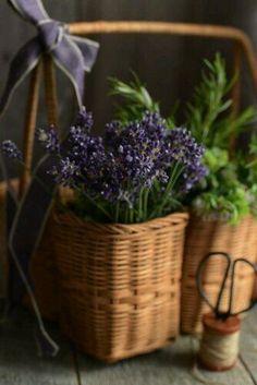 Lovely Lavender!🍃💜🍃💜🍃💜🍃💜🍃