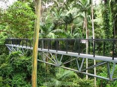 Tamborine Rainforest Skywalk in Gold Coast - Australia. This was really high up and very fun! Australia Holidays, Australia Trip, Queensland Australia, Vacation Destinations, Vacations, Gold Coast Australia, Holiday Time, Walking In Nature, Summer Travel