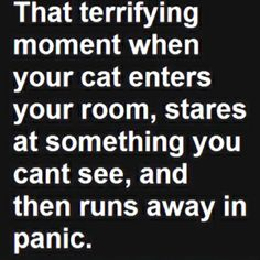 Cat people will laugh at this- the rest of you will just shake your head. LOL