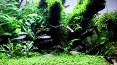 aquarium plants pearling. Excuse me while I droll on myself!  American Aquarium Product 2014