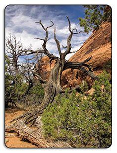 Juniper Tree, Poster Prints, Art Print, Utah Usa, Aluminum Metal, Desk Accessories, Arches, Metal Art, Office Decor
