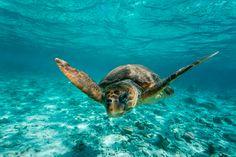 #Acuario de #Sevilla: Recuperación de tortugas marinas.  Para que su adaptación sea lo más rápida posible, se ha concebido un tanque que recrea el hábitat donde se desenvuelve esta especie.