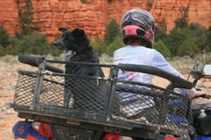 Custom ATV Dog Boxes, available for almost any atv. Quad Bike, Atv Quad, Dog Love, Puppy Love, Atv Implements, Atv Trailers, Atv Accessories, Crazy Dog Lady, Four Wheelers