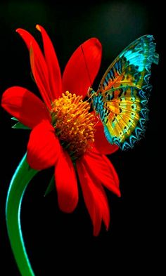 The vivid colors of life and nature.