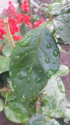 Plant Leaves, Plants, Flora, Plant, Planting
