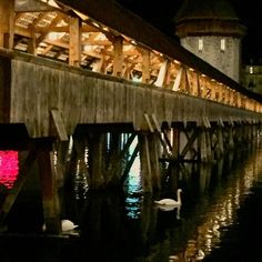 Night Swan #lucerne #Suisse #Switzerland  #bridge #woodbridge #castle