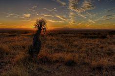 NM Sunsets