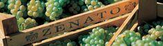 www.wijnkraam.nl - Het wijnhuis Zenato is opgericht in 1960 door Sergio Zenato, die met zijn energie en ambitie experimenteerde met nieuwe technieken en investeerde in de lokale wijngaarden om zijn wijnen tot een hoge kwaliteit te verkrijgen. De wijngaarden bestrijken 75 hectare en zijn gelegen in het oude land van Lugana en Valpolicella. Plaatsen met een mild klimaat en een ongekende charme die de Venetiaanse oever van het Gardameer biedt.