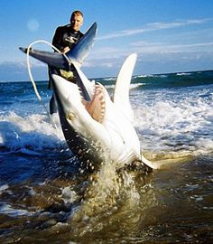 I want to go Shark Fishing one day!
