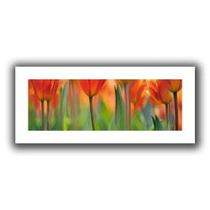 Found it at Wayfair - 'Orange Tulip' by Cora Niele Photographic Print on Canvas