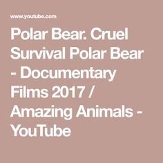 Polar Bear. Cruel Survival Polar Bear - Documentary Films 2017 / Amazing Animals - YouTube