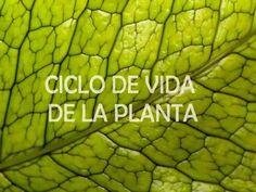 Las partes de la planta y su ciclo de vida - YouTube