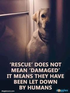 Dogs make such wonderful pets. That is why many first time canine owners prefer to take care of dogs over other possible pets. People who accept the responsibility of having a dog like a pet should re You Smile, I Love Dogs, Puppy Love, Animals And Pets, Cute Animals, Amor Animal, Animal 2, Charles Darwin, Animal Quotes
