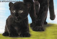 Amici Cucciolotti 2017: Fronte Figurina n. 170 Pantera nera