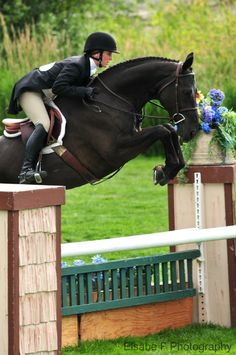 She was very nervous before the Grand Prix, but her loyal mount, Gilded Envoy, was as calm and stong as ever. By the third jump they had found a winning rhythm and cruised into 2nd place.