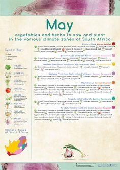 Growing your own organic delicious food is most rewarding! These educational Moonbloom posters will help guide you. South Africa Honeymoon, Grow Your Own, Vegetable Garden, Farming, Delicious Food, Herbs, Gardening, Posters, Organic