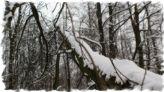 zima, śnieg, odśnieżanie