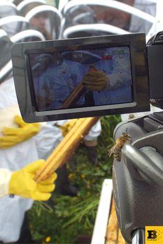 bee on the camera! #planbee #planbeeltd #schoolproject #honeybees #honeybee #beekeeping #beekeepingclub #honeycomb #beehive #greenlegacy #community #scotland #uk #honey
