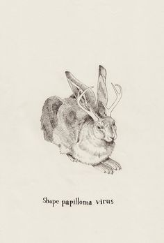Jackalope by Peter Carrington, via Flickr