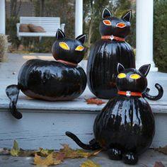 unique..pumpkin cats
