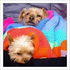 Cute...can't resist using this as my board......  Puppies by Mister Oy, via Flickr
