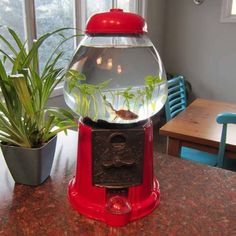 DIY Pets: Gumball Machine Fish Bowl Great for a class pet, just make sure you break the coin slot and turn knob so nobody tries to buy your fish. DIY Pets: Gumball Machine Fish Bowl Great for a class pet, just make sure you b.