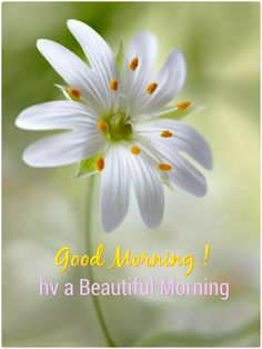 472 best good morning images on pinterest in 2018 good morning beautiful flowers white flowers flowers nature all flowers colorful flowers exotic mightylinksfo