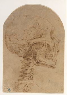 Battista Franco  (Italian, ca. 1510–1561). Skull in Profile, ca. 1538. The Metropolitan Museum of Art, New York. Robert Lehman Collection, 1975 (1975.1.326)  #skull #Halloween