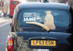 "Iams dog food – 2007  Headline : ""Good for life""  Source : Cannes Archive Online   Agency : Saatchi & Saatchi (France)"