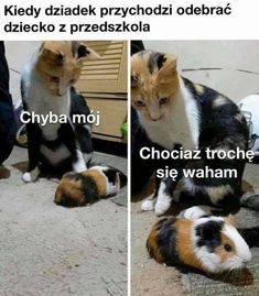 Polish Memes, Weekend Humor, Nanami, Motivational Posters, Wtf Funny, Cat Memes, Cyberpunk, Haha, Corgi