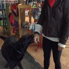 Store owners dog does this to all customers | Gif Finder – Find and Share funny animated gifs