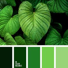 Magnificent as the nature, range of colors. What could be more beautiful colors of fresh leaves, young grass, tender green? Smooth transitions of shades of green create a uniform, integral fabric, fascinating for its natural beauty. This palette is perfect for creating a spectacular monochrome interiors. The winning design will look into the ecodesign of a country house.