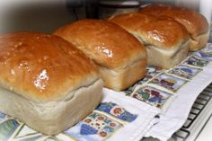 Candid Cooking: Give us this day our daily bread. Amish Recipes, Bread Recipes, Cooking Recipes, Friendship Bread Starter, Sourdough Bread Starter, Pie Dough Recipe, Wheat Bread Recipe, Dinner Rolls Recipe, Our Daily Bread