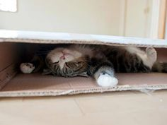 "."" Sleeping in my box...."""