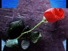 for desktop full size dwonload Red rose love wallpaper Hd Rose Flower Wallpaper, Flowery Wallpaper, Hd Wallpaper, Birthday Greetings For Sister, Happy Birthday, Sister Birthday, Birthday Wishes, Beautiful Red Roses Images, Beautiful Pictures