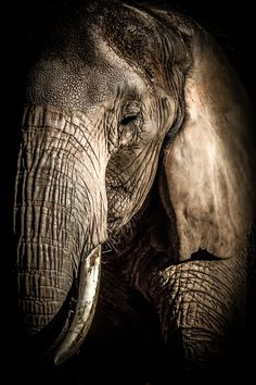 """Elephant"" by mtraufler - A Breathtaking Collection of Exotic Wildlife: Photo…"