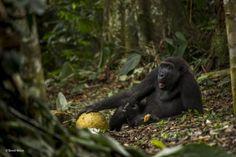 2017 Vahşi Yaşam Fotoğraf Yarışması'nın en iyileri