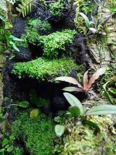 TheHydra.net • View topic - 56g Crab Loving Paludarium Tropical Terrariums, Gecko Terrarium, Green Lettuce, Reptile Enclosure, Winter Garden, Aquariums, Frogs, House Plants, Habitats