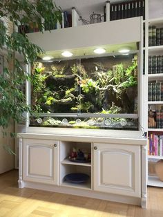 Paludarium as orchid showcase with waterfall, stream and small pools Source by hoppe_terrarien Bearded Dragon Terrarium, Bearded Dragon Cage, Bearded Dragon Habitat, Reptile Habitat, Reptile Room, Reptile Cage, Reptile Tanks, Bartagamen Terrarium, Terrarium Reptile