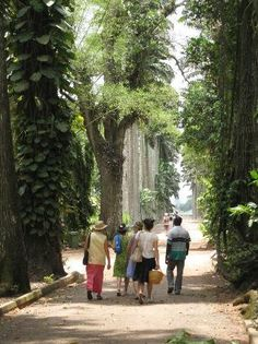Aburi Botanical Gardens, Accra: See 141 reviews, articles, and 67 photos of Aburi Botanical Gardens, ranked No.4 on TripAdvisor among 39 attractions in Accra.