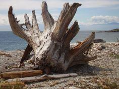 drift stump