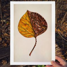 Info: Print, size : x 21 cm ( x in) Printed in Norway on Scandia 2000 white paper, 240 grams Yellow Leaves, White Paper, A4, Flora, Corner, Prints, Plants, Printed, Art Print