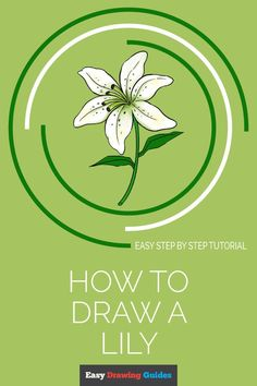 How to Draw a Lily in a Few Easy Steps Flower Drawing Tutorials, Drawing Tutorials For Kids, Drawing For Beginners, Drawing For Kids, Drawing Ideas, Flower Drawings, Drawing Flowers, Drawing Pictures, Floral Drawing